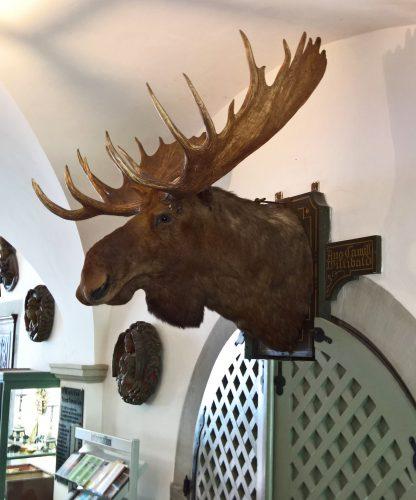 Kolossaler Elchkopf aus Alaska