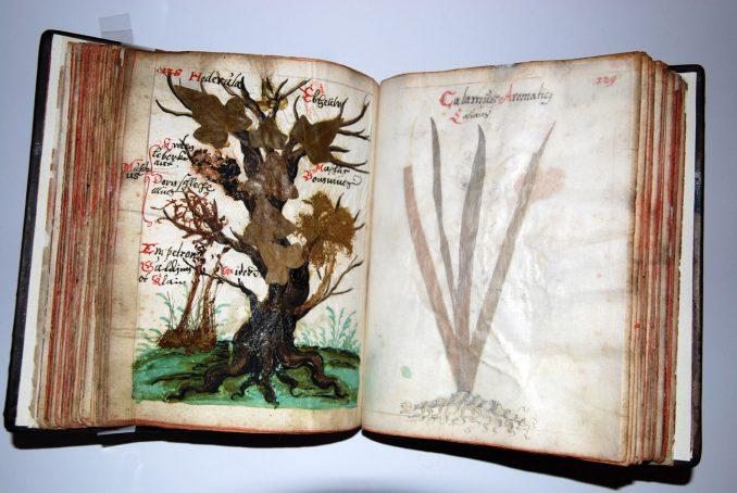 Han-Herbarium-1-1